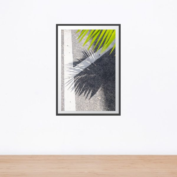 Green frond with shadow on grey